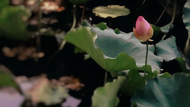 flower-flora-leaf-nature-plant 图片素材