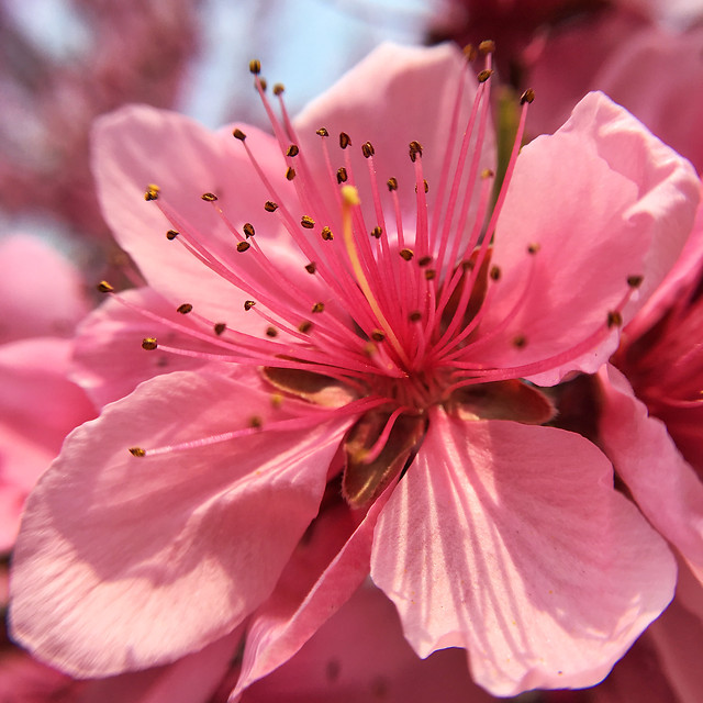 flower-nature-flora-no-person-leaf picture material