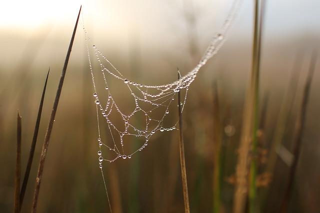 dawn-spider-dew-nature-no-person picture material