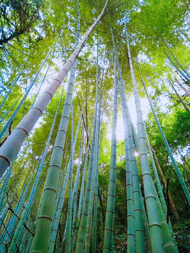 bamboo-nature-wood-leaf-lush picture material