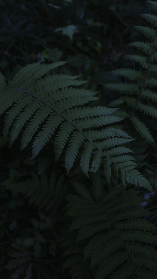 dark-tone-natural-green-terrestrial-plant-vegetation picture material