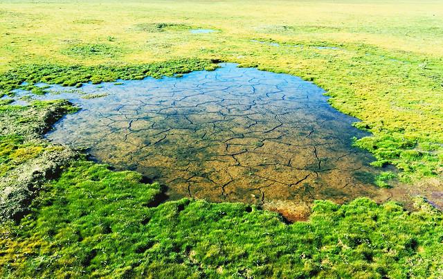 landscape-nature-grass-scene-sight picture material