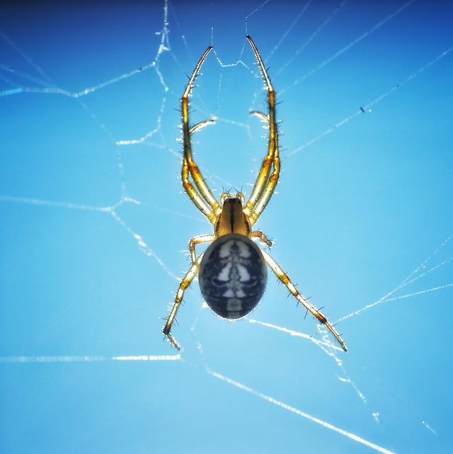 spider-arachnid-creepy-spiderweb-insect picture material