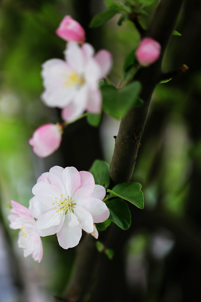 flower-nature-flora-leaf-no-person picture material
