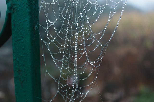 spider-spiderweb-cobweb-trap-arachnid picture material