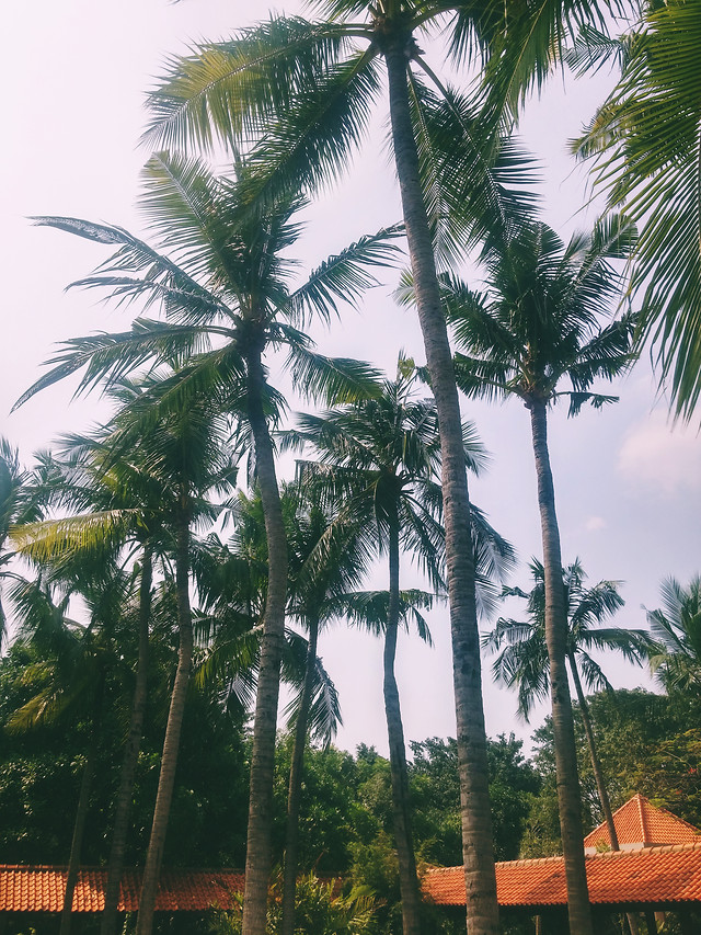 palm-tree-beach-tropical-no-person picture material