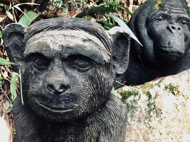 portrait-face-nature-sculpture-wildlife picture material