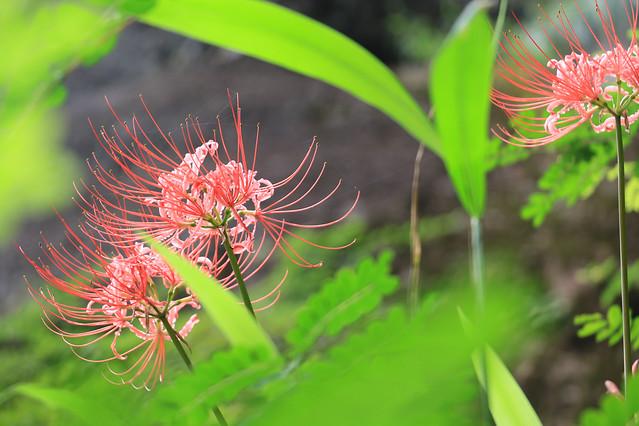 flora-nature-flower-garden-summer picture material
