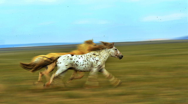 mammal-grass-grassland-animal-ecosystem picture material