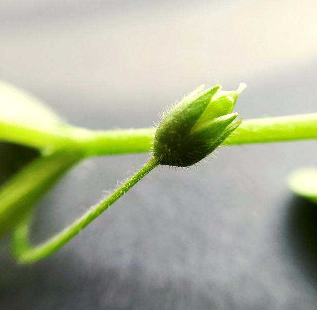 flora-nature-leaf-garden-rain picture material