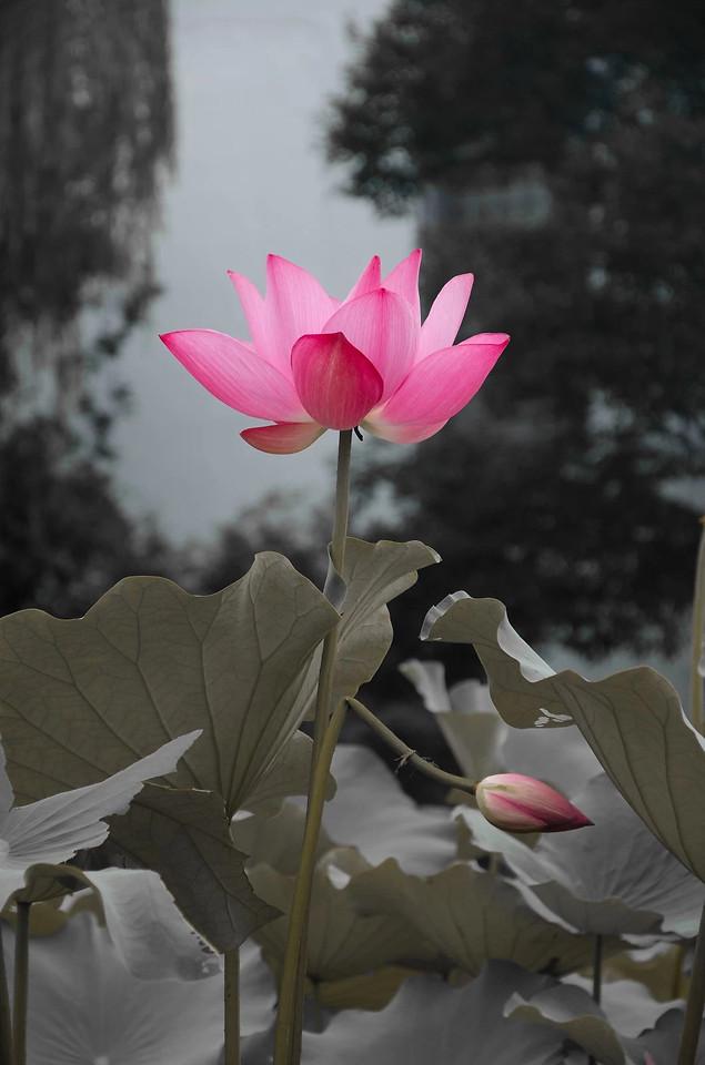 flower-nature-flora-plant-leaf 图片素材