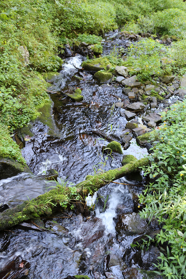 water-stream-nature-moss-river picture material