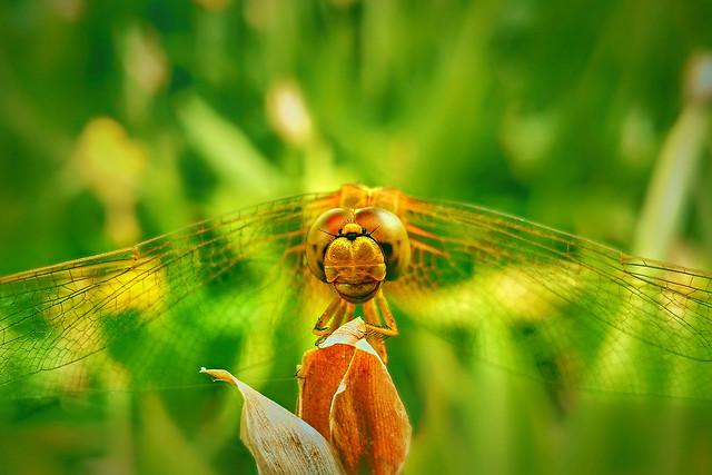 nature-summer-grass-flora-garden picture material