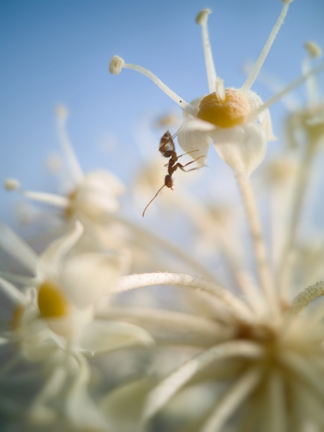 mobile-photography-fresh-insect-ant-flower picture material