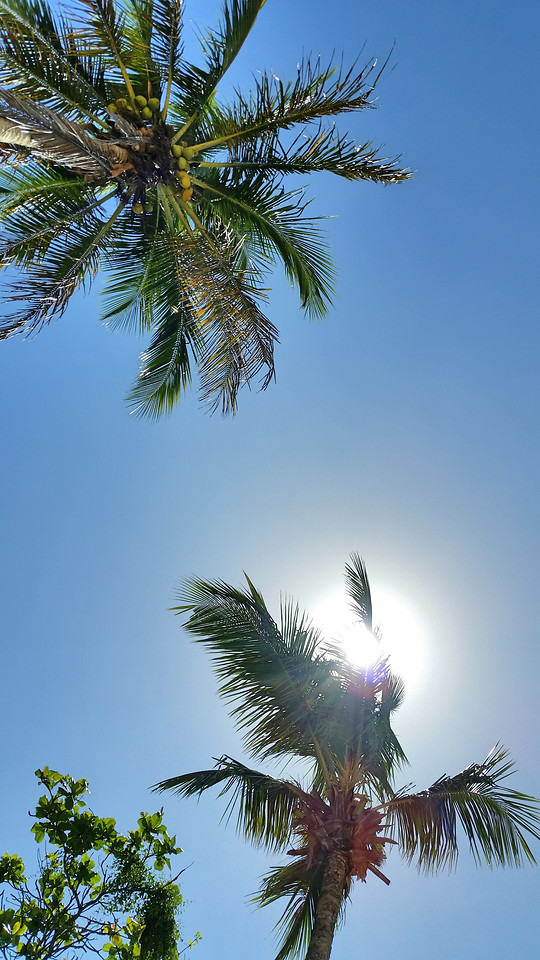 palm-tropical-no-person-tree-beach picture material