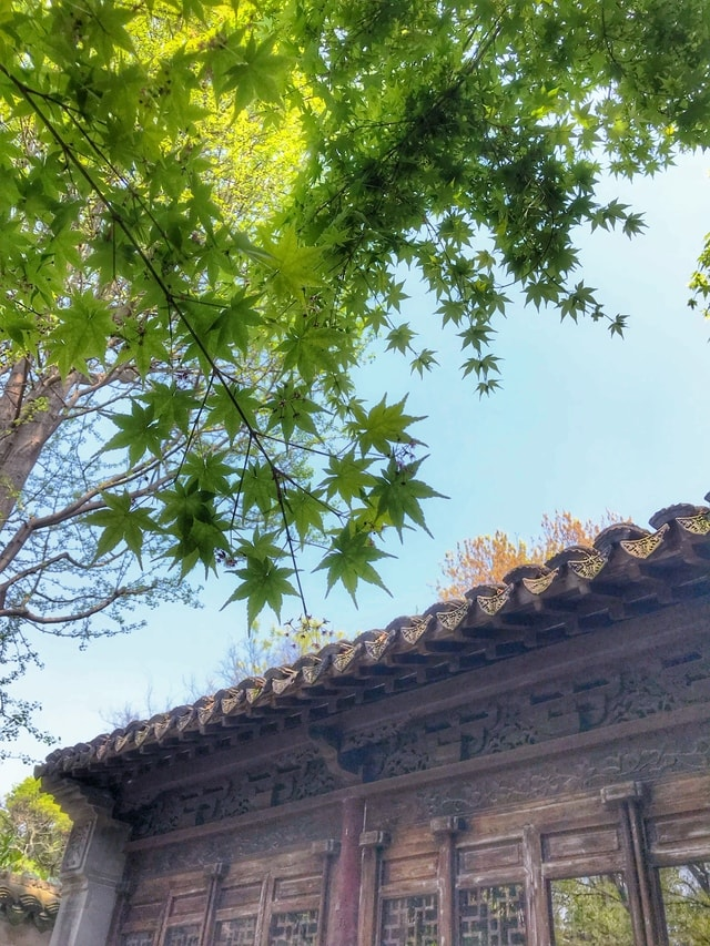 stepping-on-the-spring-to-find-a-new-green-tree-leaf-woody-plant-sky 图片素材