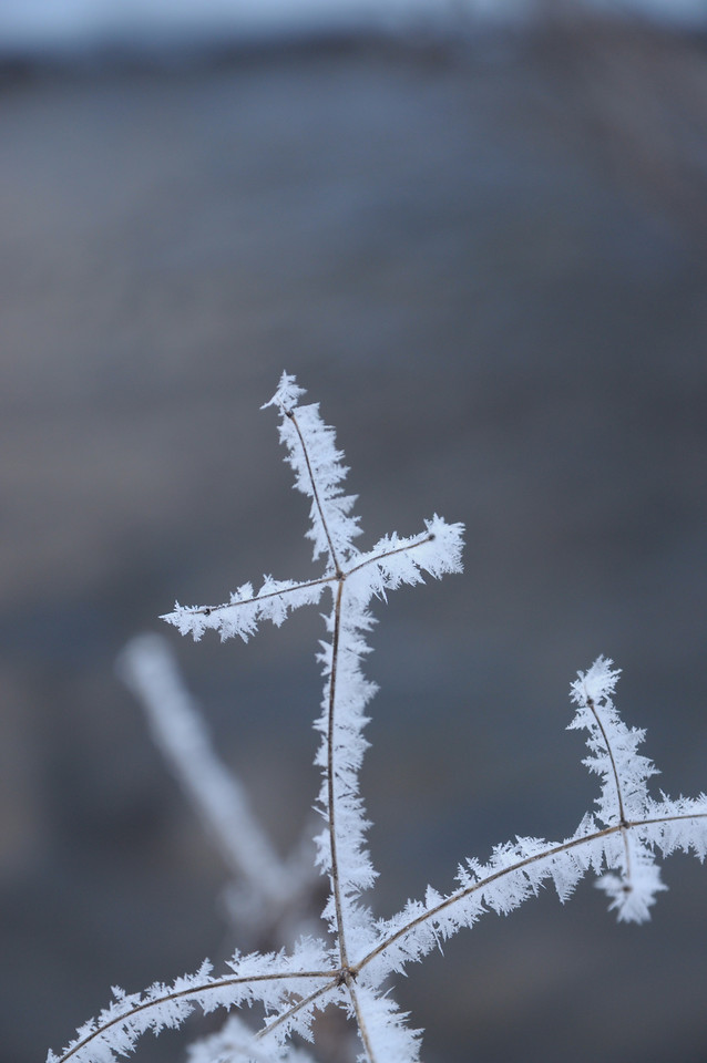 frost-snow-no-person-winter-nature picture material