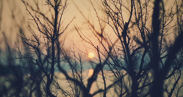 dawn-tree-nature-sunset-silhouette picture material