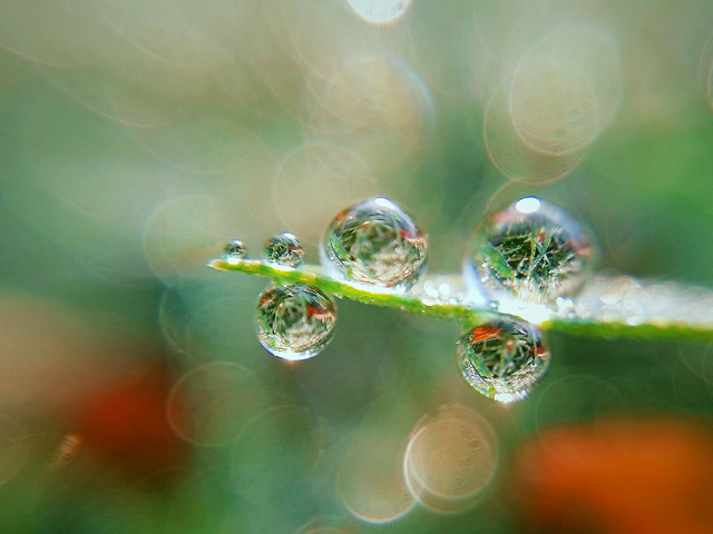 rain-dew-h2o-nature picture material