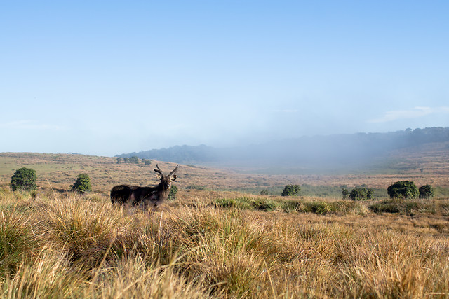 landscape-mammal-travel-outdoors-sky picture material