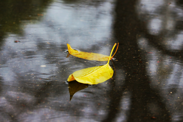 no-person-water-nature-leaf-rain picture material