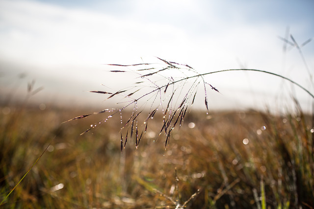 nature-grass-dawn-sun-field picture material