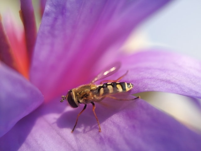 mobile-photography-macro-budding-fly-color-insect picture material
