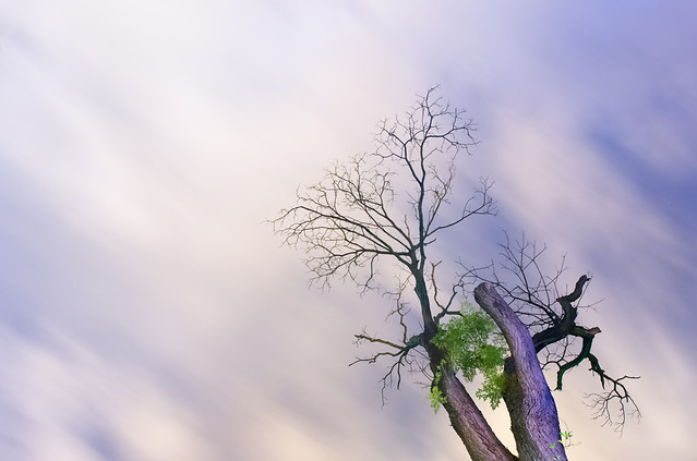 tree-sky-branch-leaf-cloudy picture material