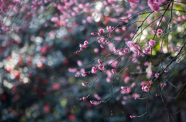 flower-nature-tree-flora-branch picture material