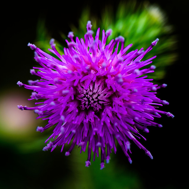 flower-nature-no-person-flora-garden picture material