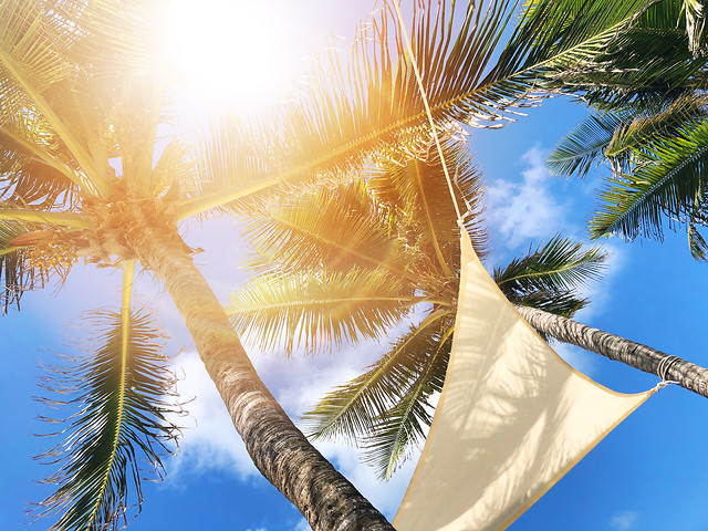 palm-tropical-tree-sky-summer picture material