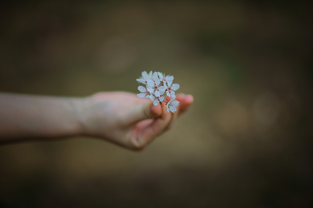 flower-nature-blur-hand-dof picture material