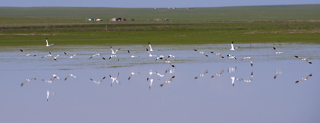 bird-wildlife-water-seagulls-nature picture material