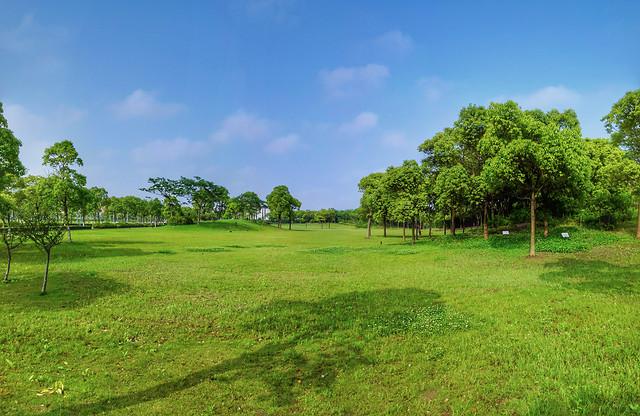 grass-landscape-tree-nature-no-person picture material