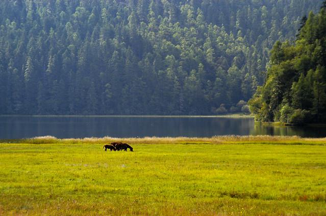 no-person-landscape-grassland-tree-wood 图片素材