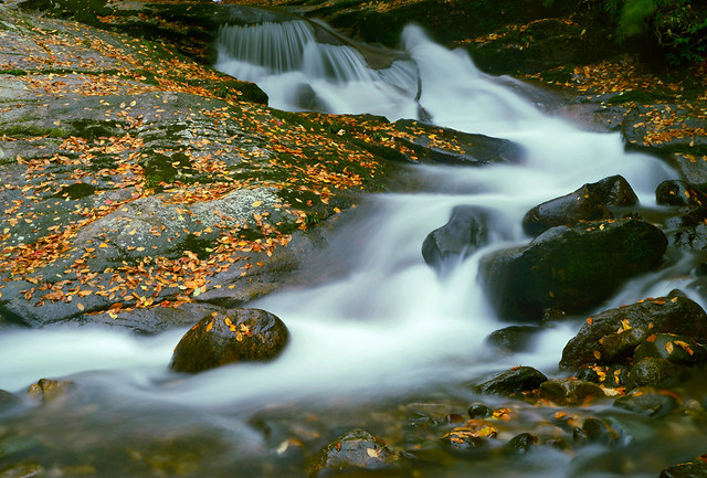 fall-water-no-person-river-stream picture material