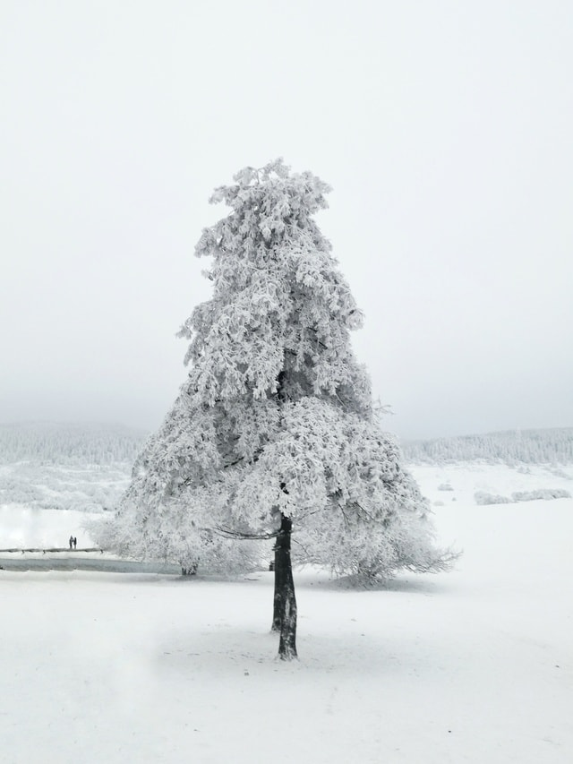 natural-snow-tree-winter-freezing 图片素材