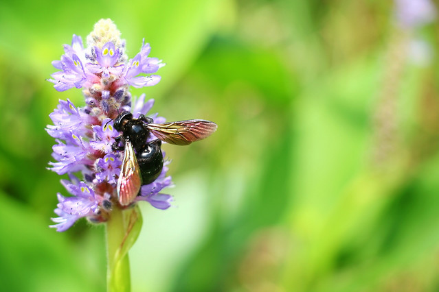 nature-insect-summer-bee-no-person picture material