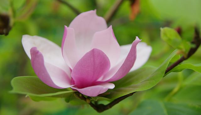 leaf-nature-flora-flower-garden 图片素材