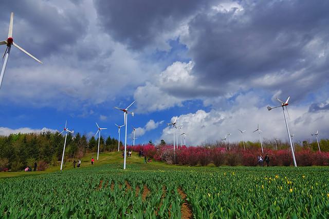 windmill-electricity-farm-wind-alternative picture material