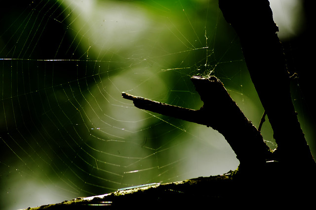 spider-spiderweb-arachnid-insect-web-together picture material