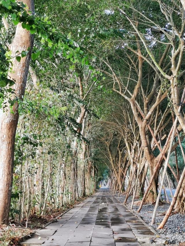 tree-vegetation-branch-woody-plant-nature-reserve 图片素材