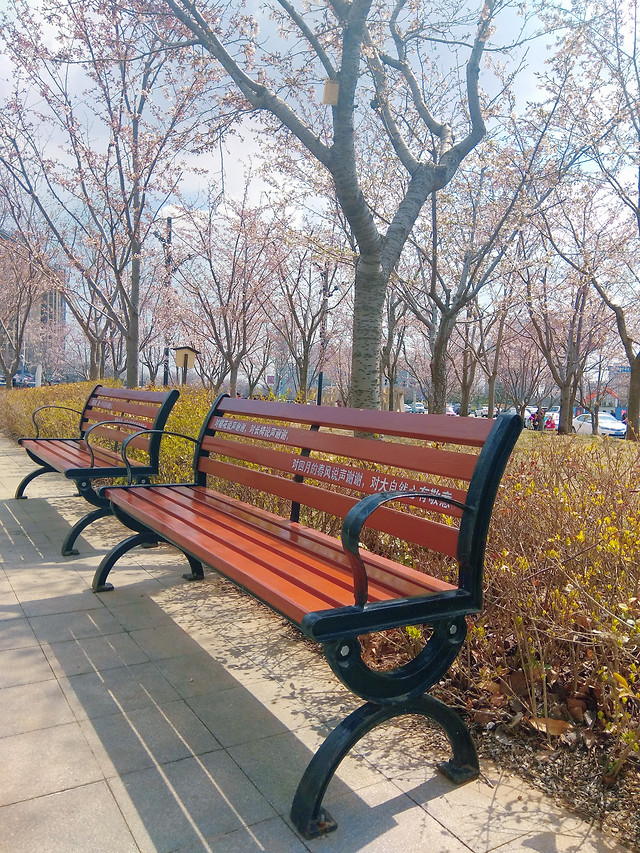 bench-wood-park-no-person-fall picture material