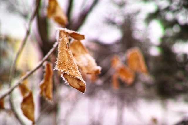 winter-no-person-tree-outdoors-leaf picture material