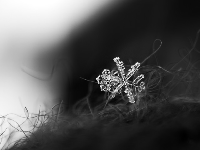 monochrome-winter-christmas-nature-dof picture material
