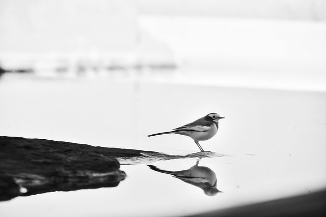 monochrome-bird-no-person-nature-black-white 图片素材