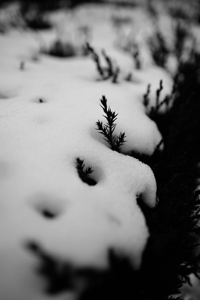 black-white-black-monochrome-photography-freezing-photography picture material