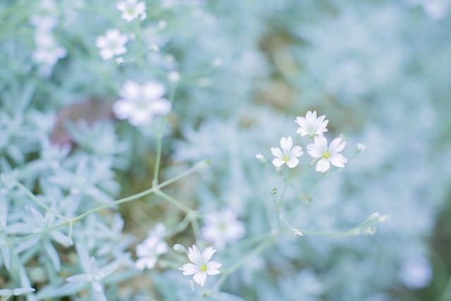 flower-nature-flora-summer-garden picture material
