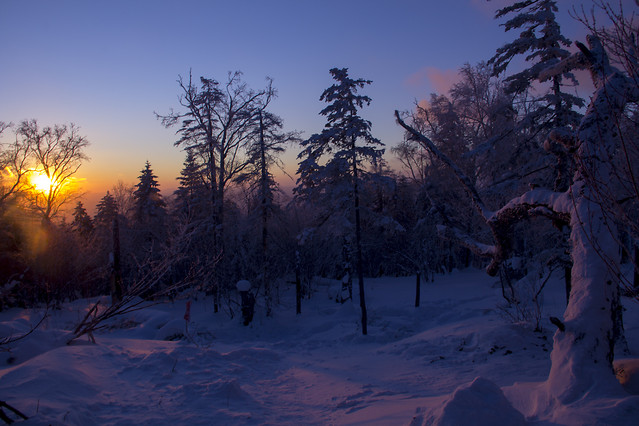 snow-winter-tree-cold-frost picture material