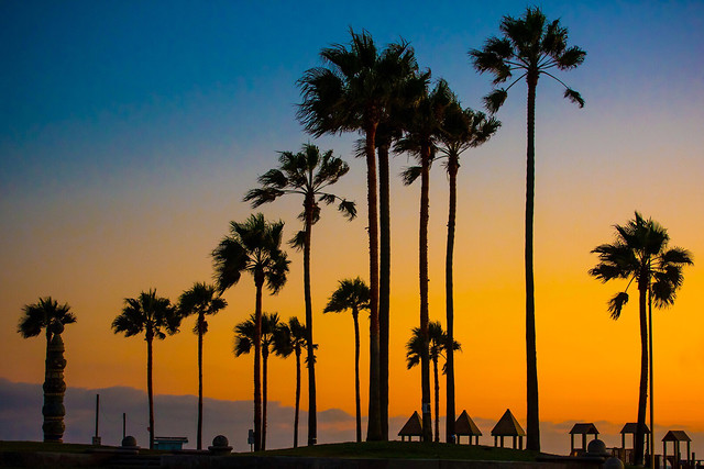 tree-sunset-dawn-no-person-palm picture material